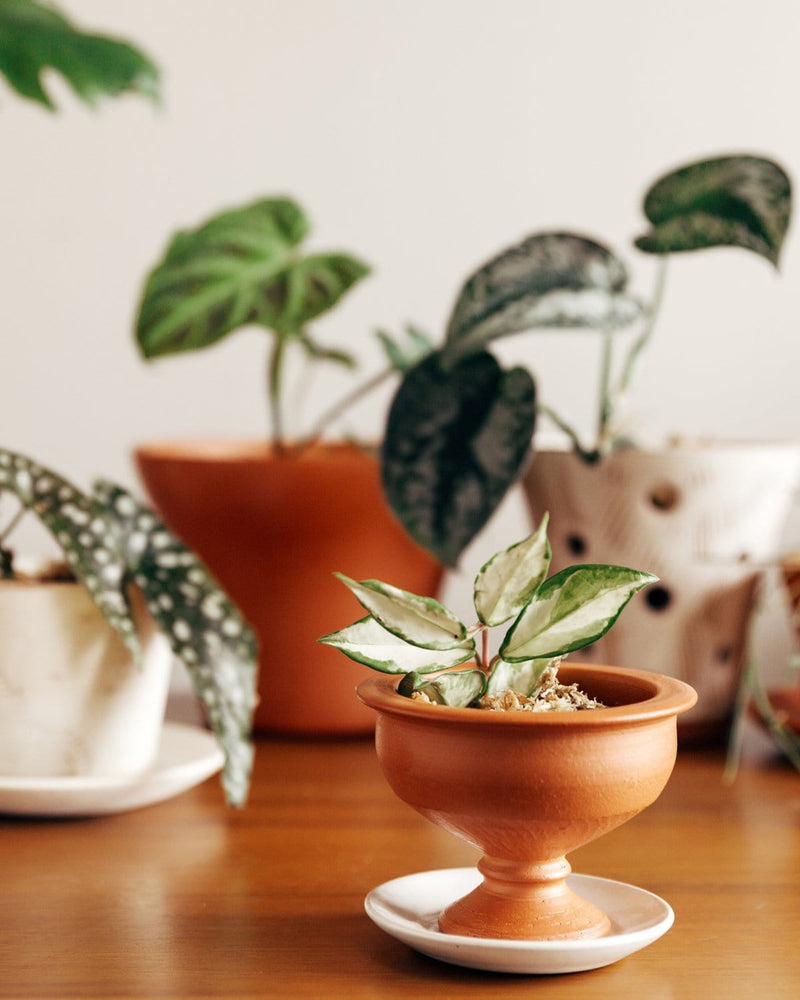 Pedestal Bowl: Soft-as-Silk Mini Plant Pot