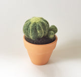 Wool Felted Cactus , needle felting kits