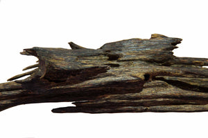 A heavily resinous piece of oud wood from Assam India