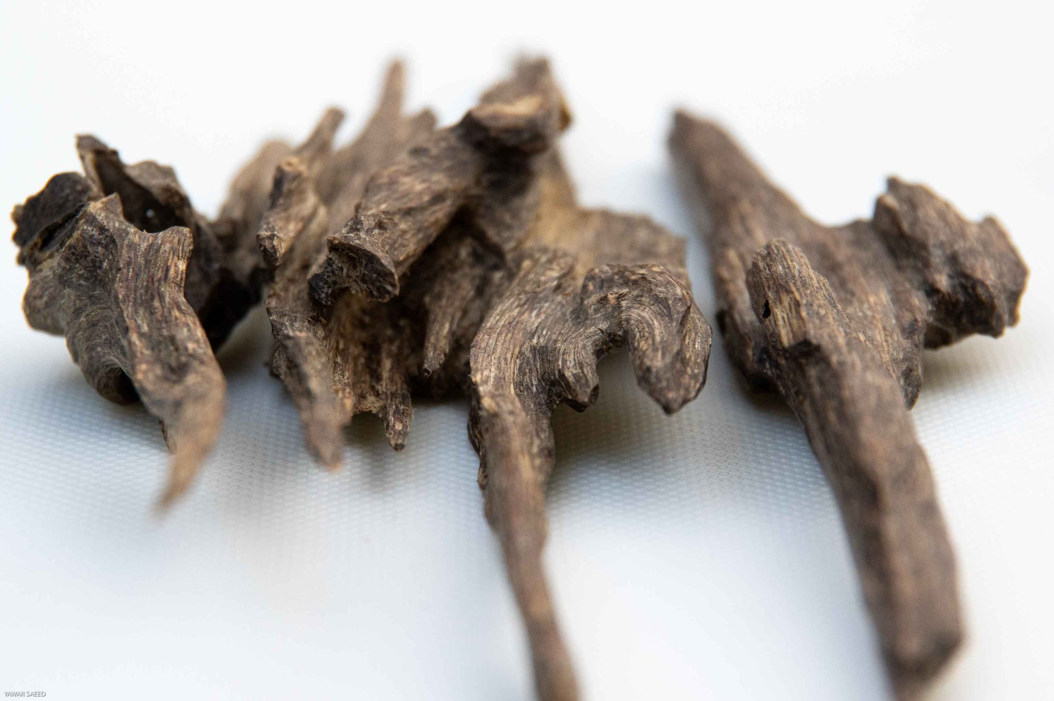 Agarwood Chips from India
