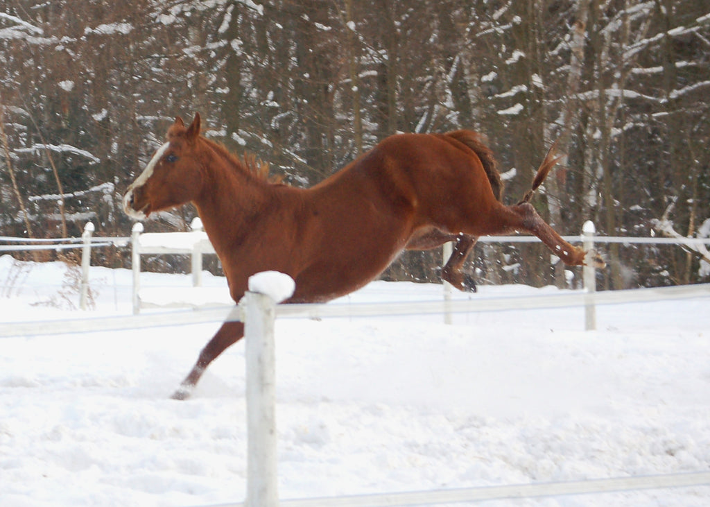 How much forage does your horse need to stay warm this winter?