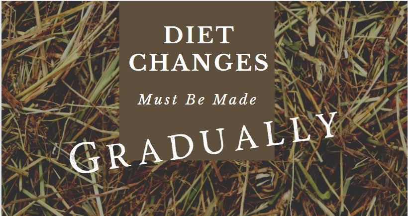 Changing your horses diet?