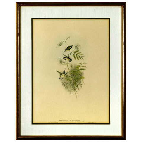 Hummingbirds Ornithological Colored Lithograph by John Gould