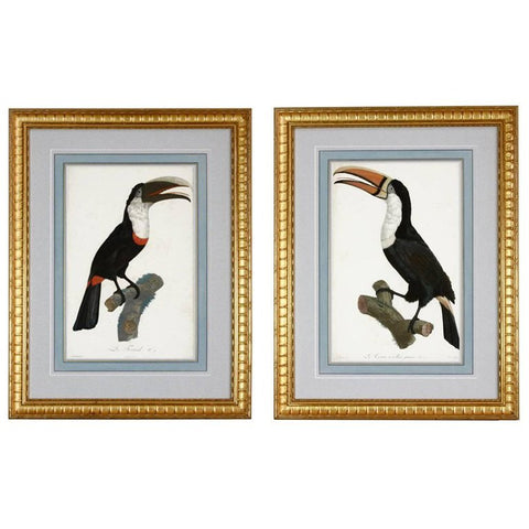 Pair of Colored Ornithological Engravings after Jacques Barraband