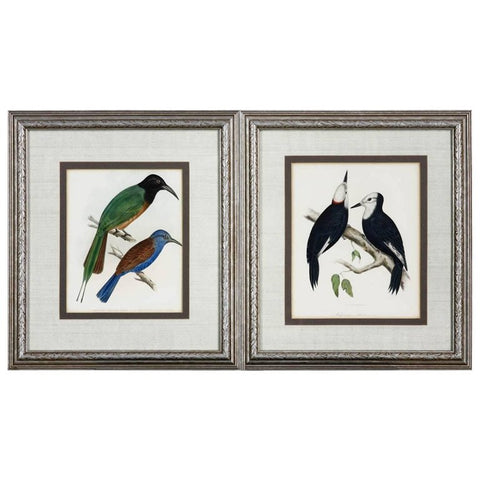 Pair of 19th Century Framed Ornithological Bird Prints