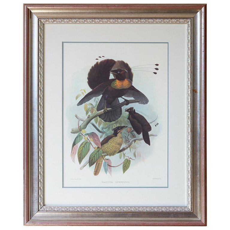 Birds of Paradise Lithograph by Elliot
