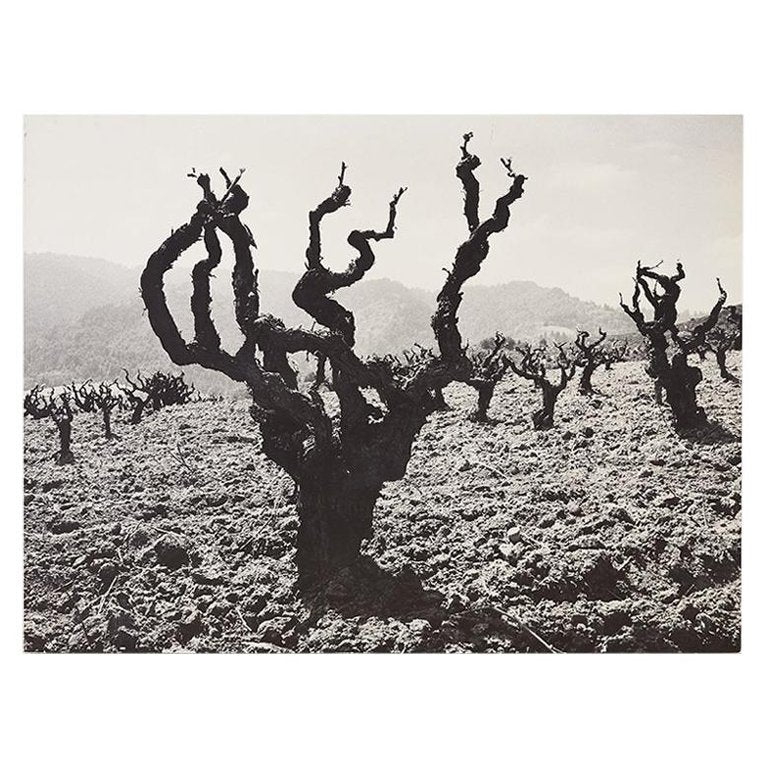 Ansel Adams Mounted Print Story of a Winery