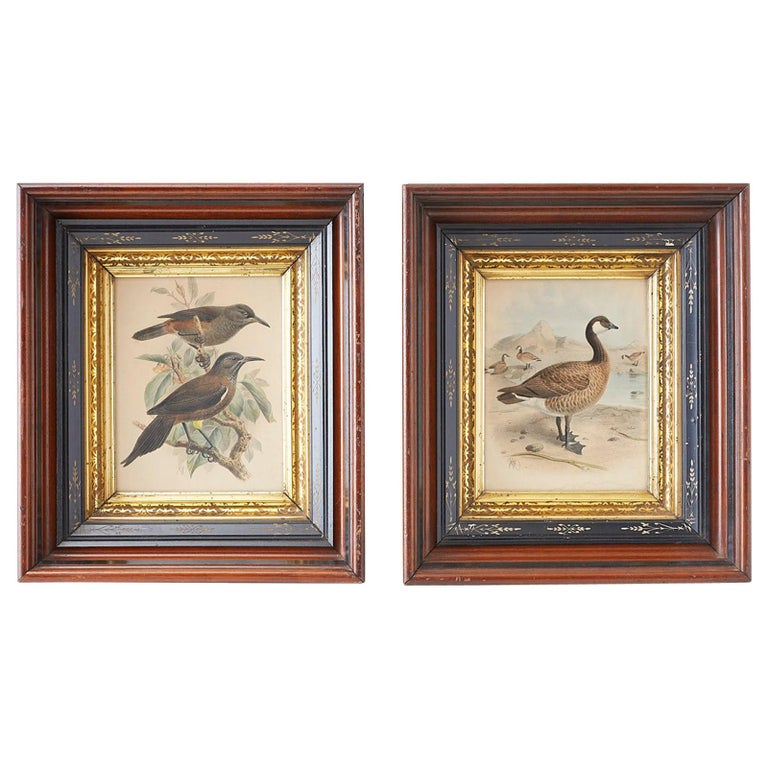 Pair of John Gerrard Keulemans Ornithological Prints