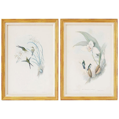 Pair of John Gould Ornithological Colored Hummingbird Prints