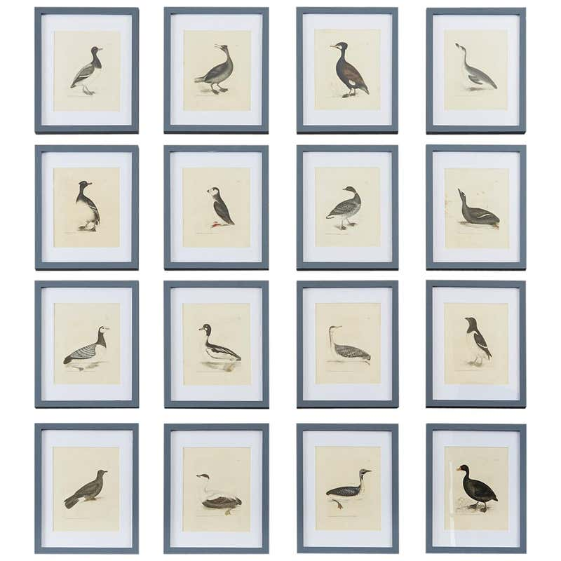Set of Sixteen 18th Century Bird Etchings by William Lewin