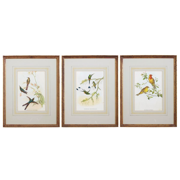 Set of Three Colored Ornithological Prints After Gould