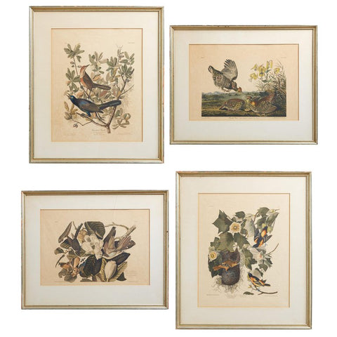 Set of Four Ornithological Prints after John Audubon