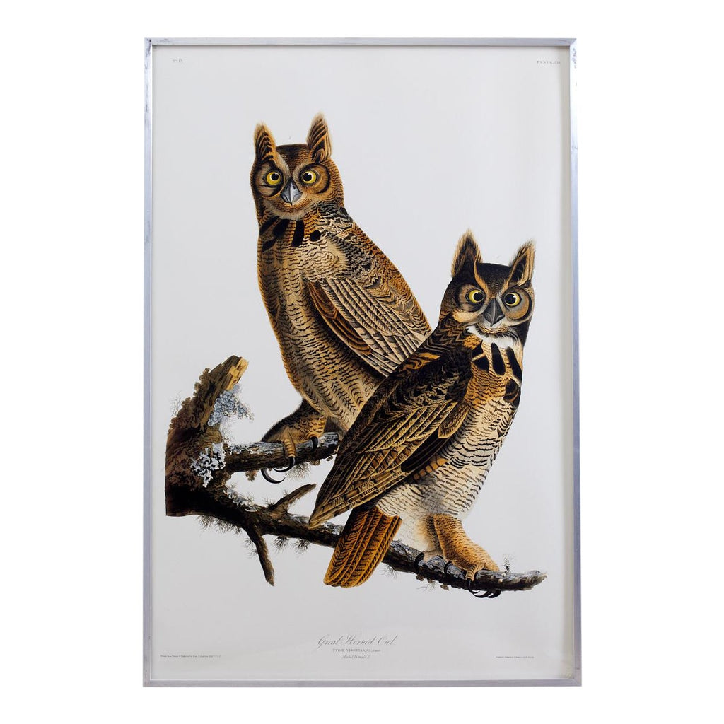 Audubon Great Horned Owl Plate #61 Havell Oppenheimer Edition