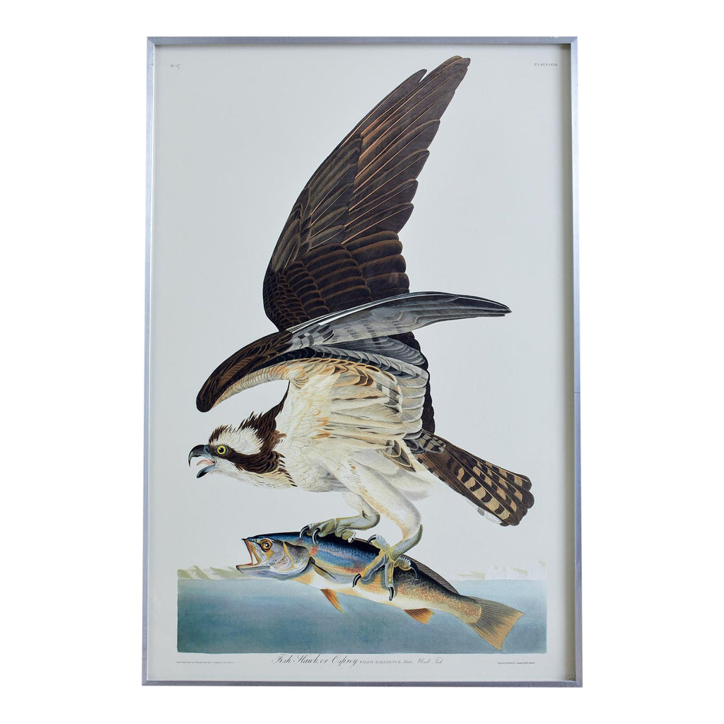 Fish Hawk or Osprey Plate #81 Havell Oppenheimer Edition-2006
