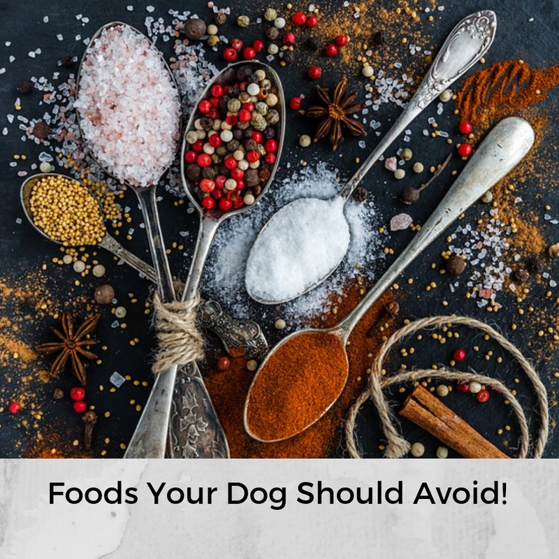 Foods Your Dog Should Avoid!