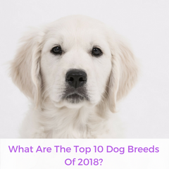 What Are The Top 10 Dog Breeds Of 2018? | Bubu Brands