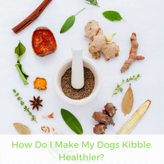 How Do I Make My Dogs Kibble Healthier? | Bubu Brands