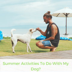 Summer Activities To Do With My Dog? | Bubu Brands
