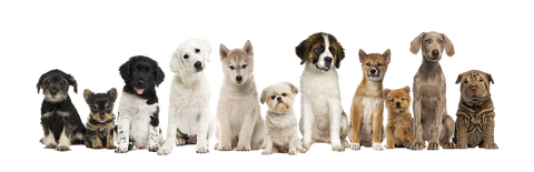 Are You Ready For a Puppy? | Dogs of various sizes and breeds sitting in a horizontal line looking into the camera | Bubu Brands
