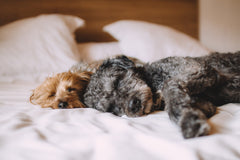 Two dogs one light colored and one dark laying on top of a light colored bed cover | Bubu Brands