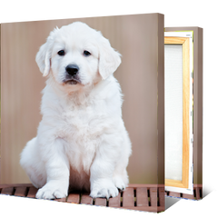 15 Perfect Gifts to get a Dog Lover | A canvas picture with a light colored puppy on it | Bubu Brands