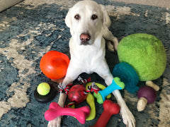 Yellow lab lays in a pile of brightly colored dog toys while looking at the camera | Bubu Brands