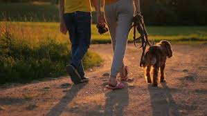 medium sized dog and the legs of two humans walking during the golden hour on a dirt path