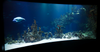 Top 5 Aquarium Decorating Tips