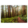 Redwoods Trail