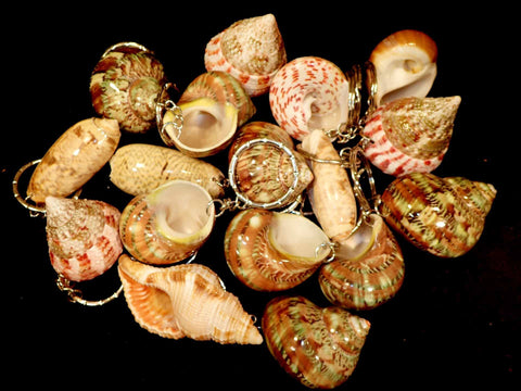 Keyrings Made From Shells