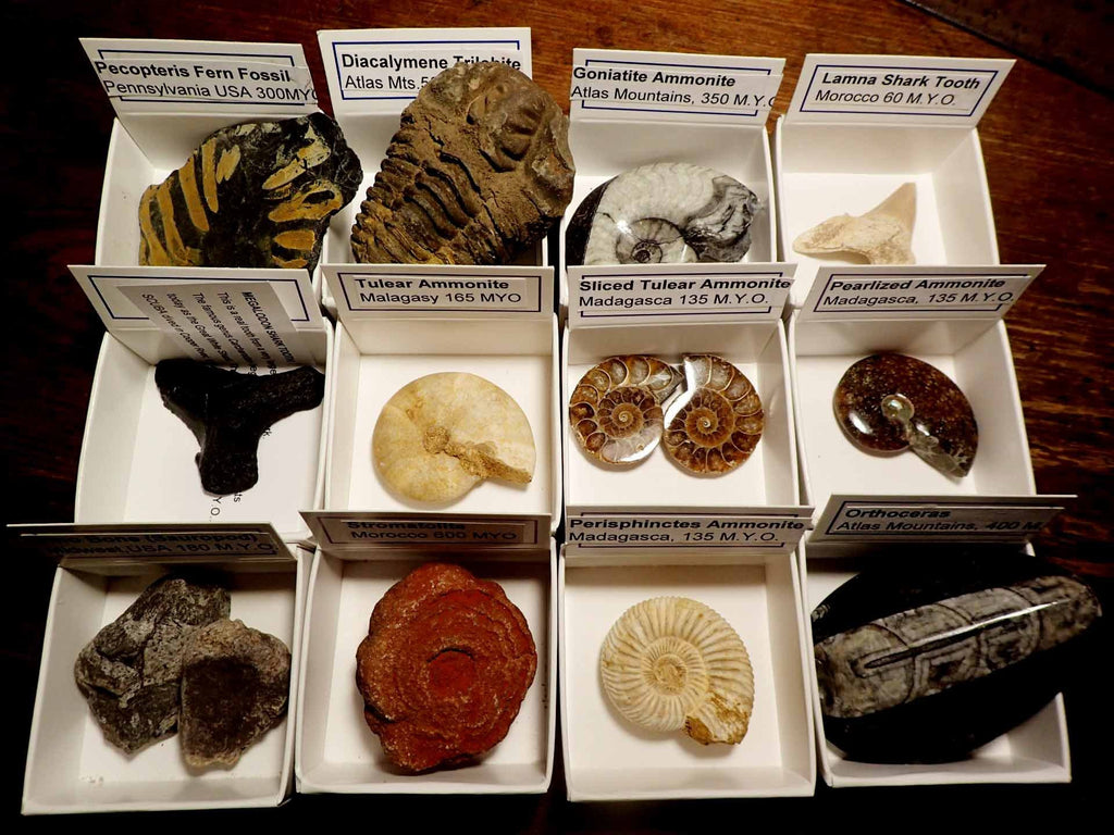 Fossils Boxed