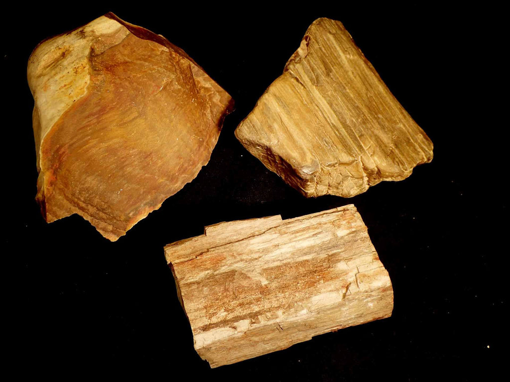 Petrified Wood (Raw)