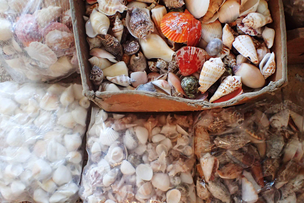 Mixed Shells By The Kilo Small Size