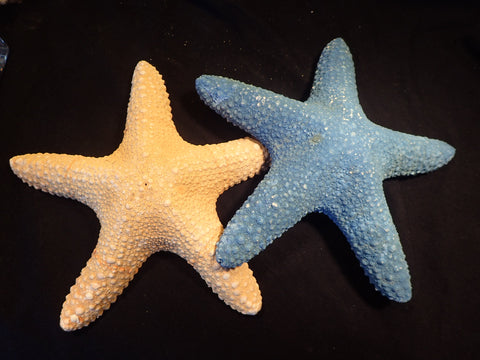 Starfish - Bubble