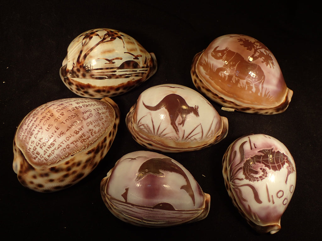Carved Tiger Cowries