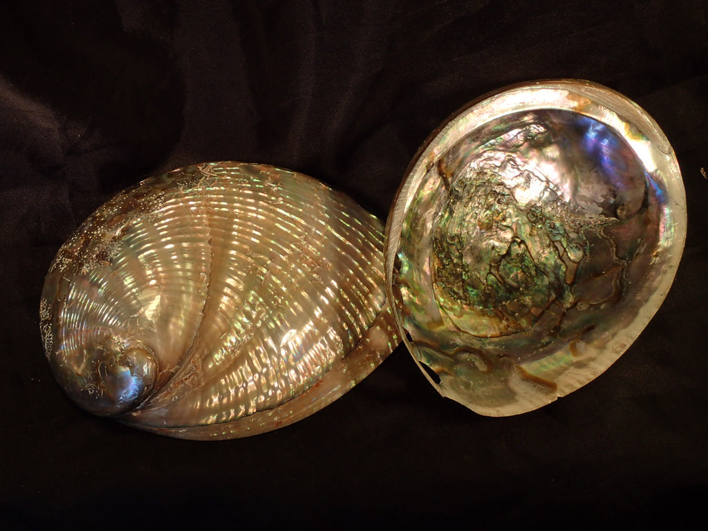 Pearlized Green Abalone (Polished)