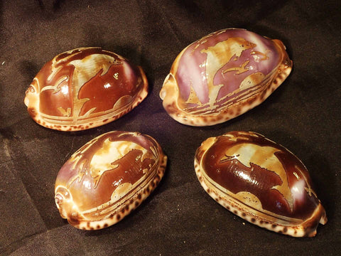 Carved Arabica Cowries