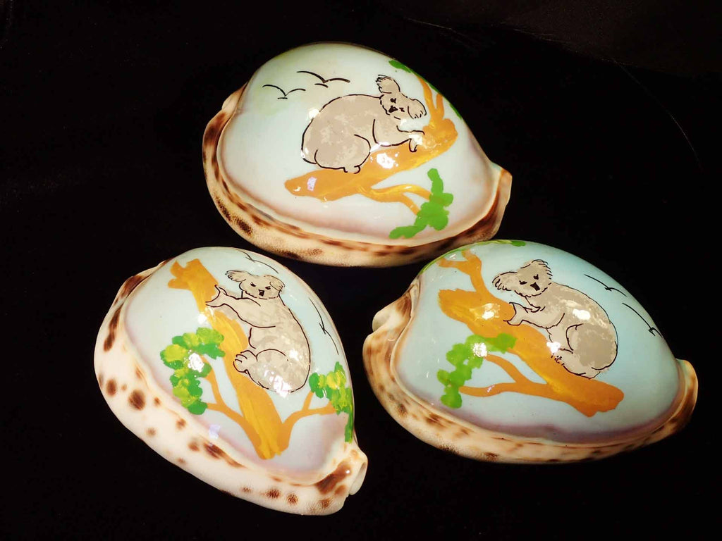Painted Tiger Cowries - Koala