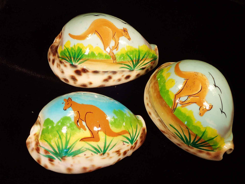 Painted Tiger Cowries - Kangeroo
