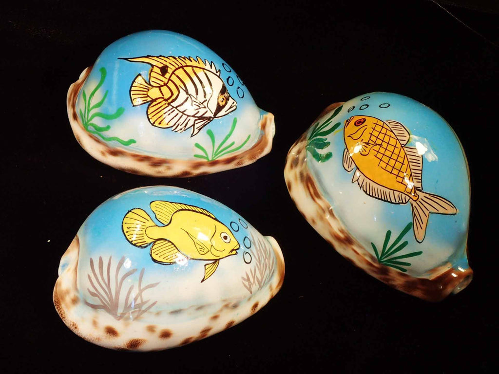 Painted Tiger Cowries - Fish