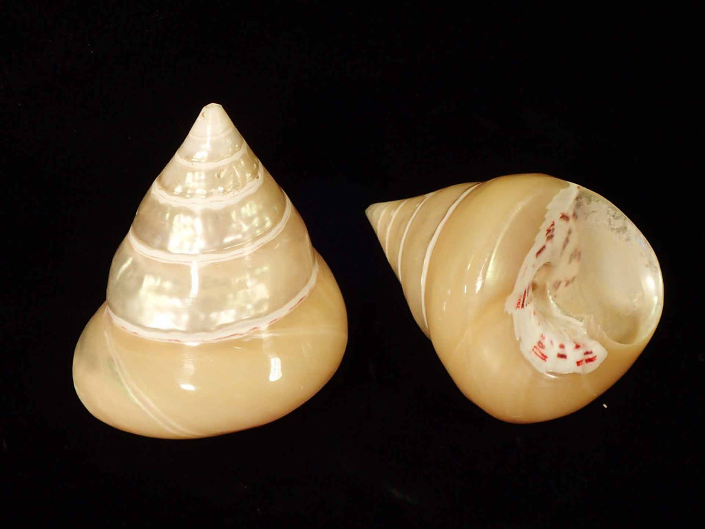 Pearlized Cone Top