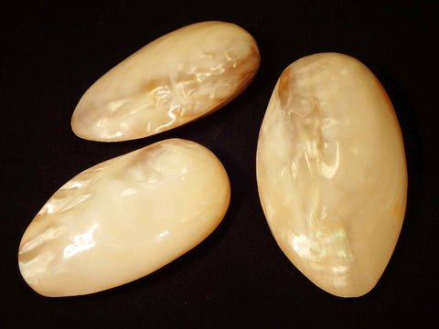 Pearly Heavy River Clam
