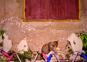 Cats of Laos - Travel wall art prints by Edwin Datoc Gallery