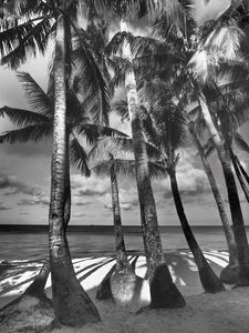 Shades of Trees, Boracay Island Philippines - Travel wall art prints by Edwin Datoc Gallery