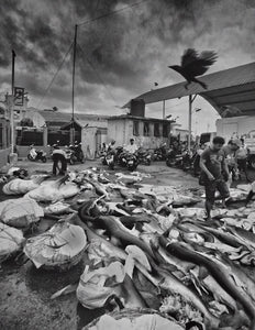 Lellama Shark Market, Negombo Sri Lanka - Travel wall art prints by Edwin Datoc Gallery