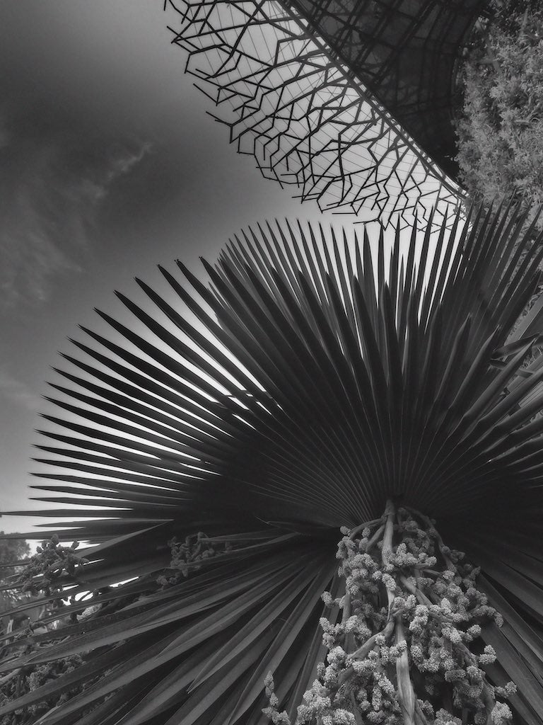 Gardens by The Bay, Series 2/4, Singapore - Travel wall art prints by Edwin Datoc Gallery