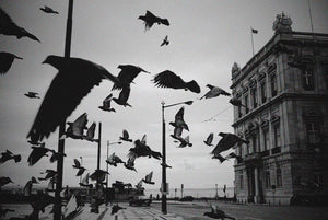 Birds, Lisbon Portugal - Travel wall art prints by Edwin Datoc Gallery