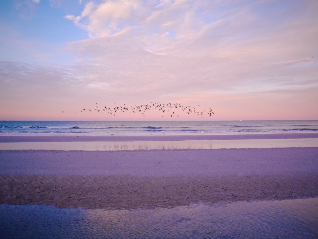 Pelicans, San Marco Island, Florida USA - Travel wall art prints by Edwin Datoc Gallery