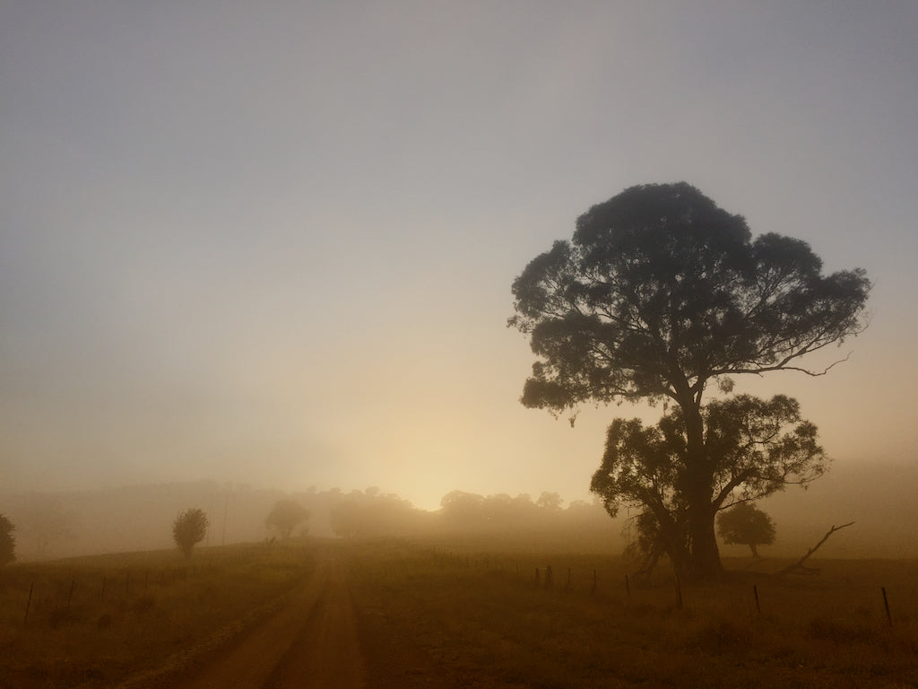 Misty at Dawn, Emu Swamp,  Australia - Travel wall art prints by Edwin Datoc Gallery