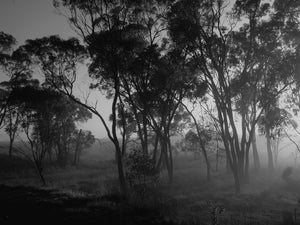 Dawn, Emu Swamp, New South Wales Australia - Travel wall art prints by Edwin Datoc Gallery